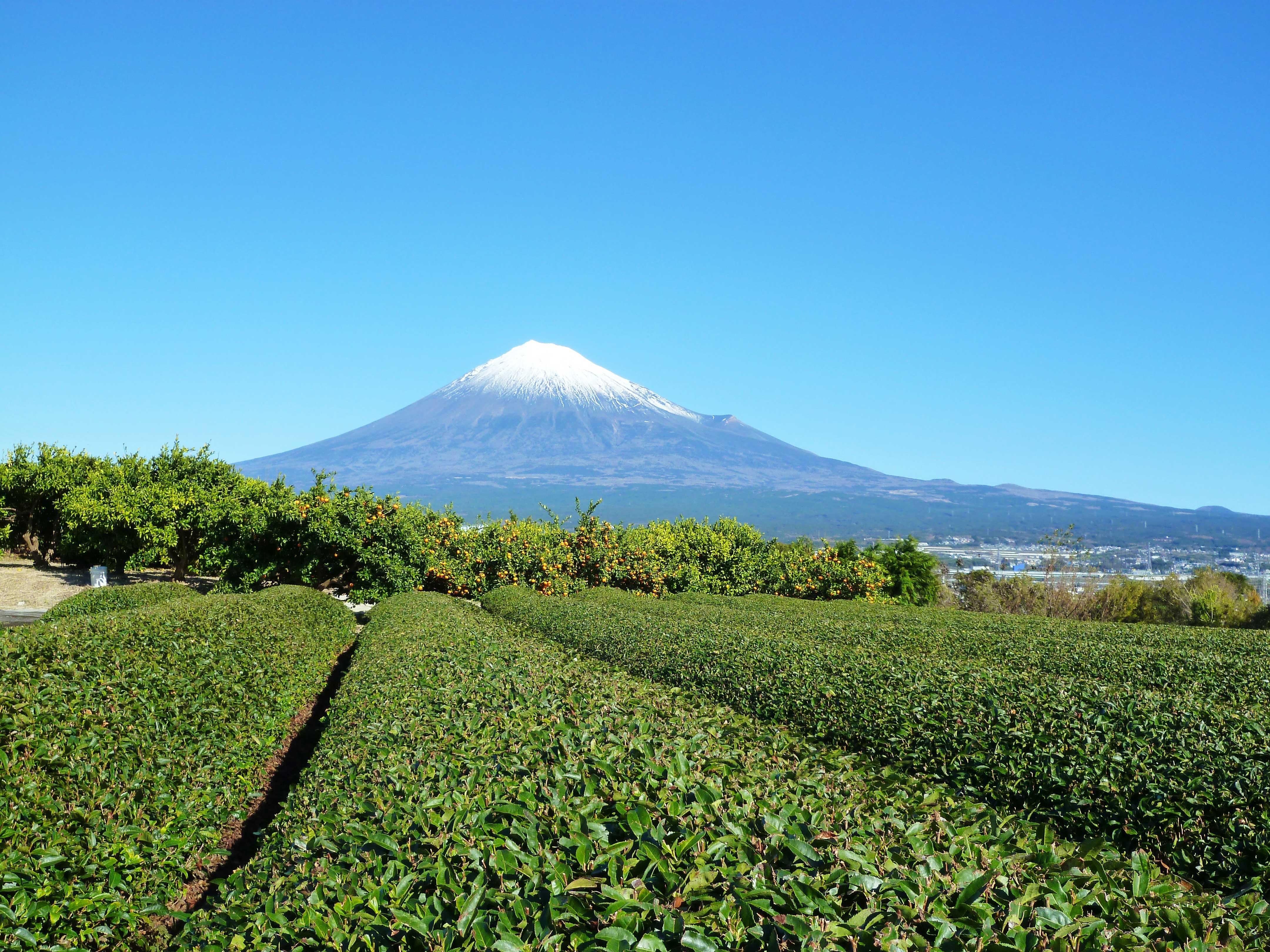 茶卸総本舗ブログ